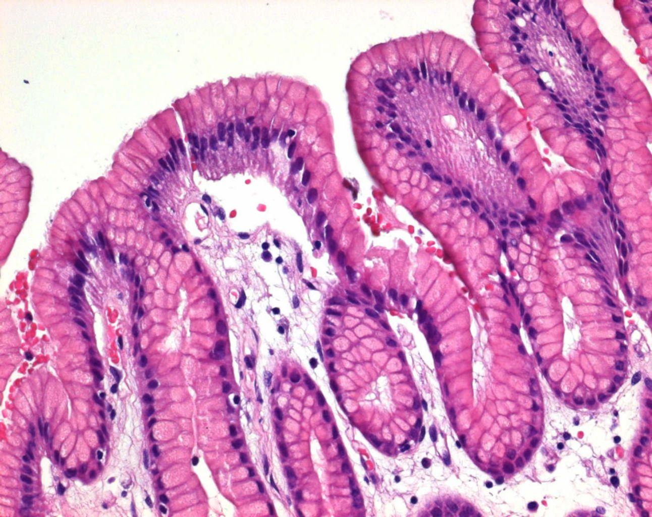 Farbstoffe für die mikroskopie vwr